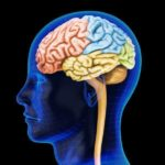 nervous-system-function-facts-diseases